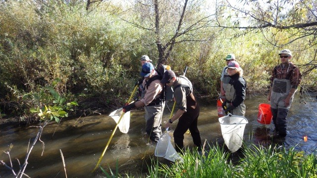 CSU FW204 Students Electrofish the Poudre River