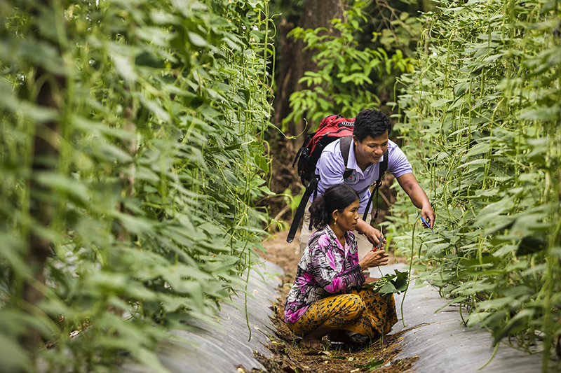 A field technician teaches sustainable agricultural practices to a farmer in Cambodia.