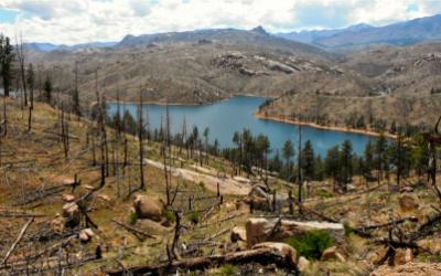 Burned forest near lake