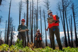 Camille Stevens-Rumann, left, a forestry researcher at Colorado State University, graduate assistant Zoe Schapira , and Field Technician Zane Dickson-Hunt gather data amid the burn scar of the 2018 Spring Fire June 11, 2019 near La Veta, Colo. (Mike Sweeney, Special to The Colorado Sun)